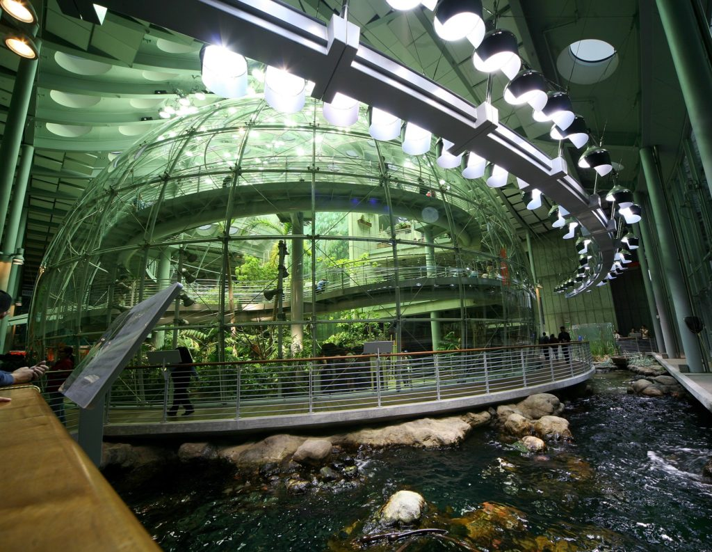 rain forest dome at California Academy of Sciences